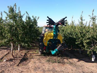 4 Orchard | Olive Spray Head 4