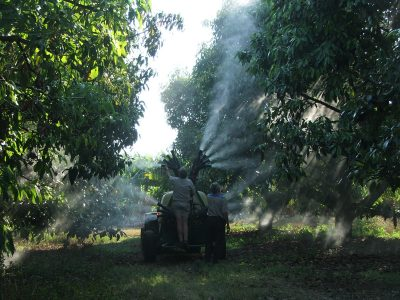 4 Orchard | Olive Spray Head 5